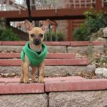 Are you traveling but not sure what to do with your pet?