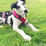 The Dos and Don'ts of Keeping the Family Dog Healthy