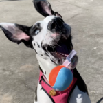 Our Favorite Chuckit! Toys For Fetch Play Time
