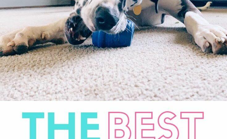The Best Dog Treat